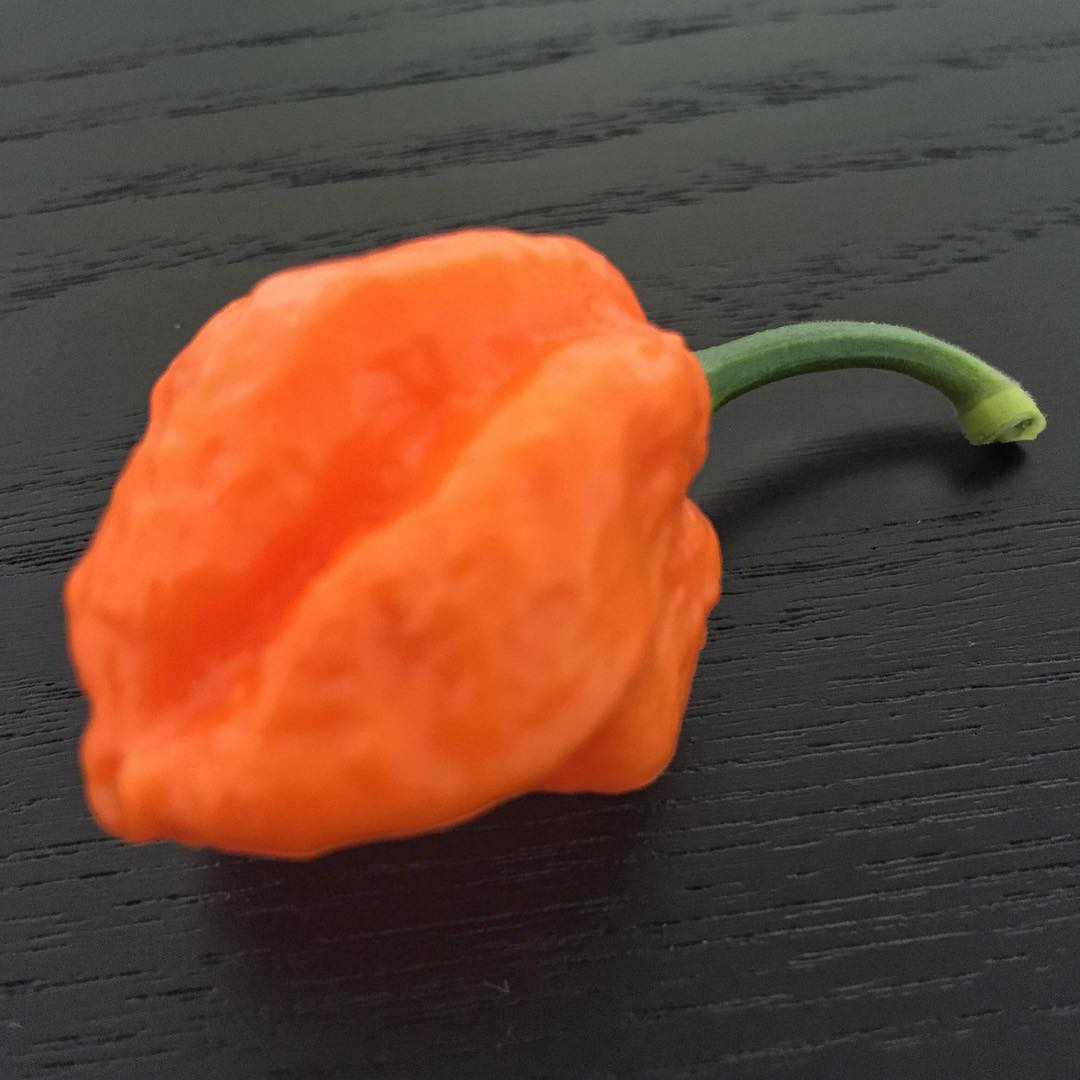 Bhut Orange Copenhagen